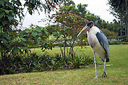 Marabou Stork, (Leptoptilos crumeniferus), Photogrphed in Tanzania