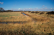 AE2CHF Marshland reedbeds on drained land at Hollesley Suffolk England