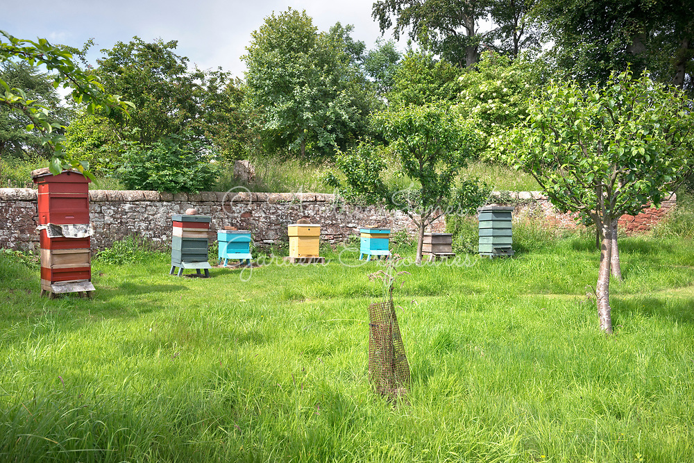 Bee hives and fruit trees in a country garden.