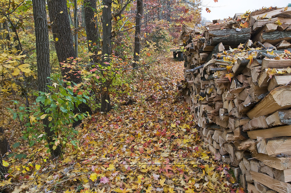 Firewood and foliage in November