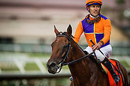 DEL MAR CA - AUGUST 20: Beholder #7, ridden by Gary Stevens, at the TVG Pacific Classic Stakes at Del Mar on August 20, 2016 in Del Mar, California. (Photo by Alex Evers/Eclipse Sportswire/Getty Images)