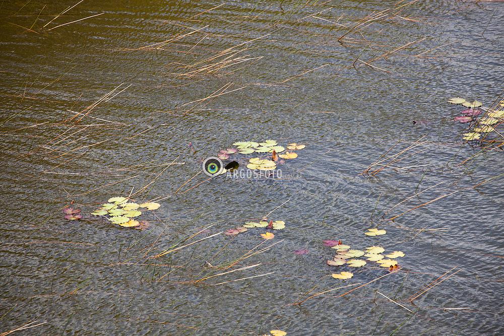 Folhas caidas sobre a agua e sendo levadas pela correnteza e pelo vento / Leaves at the watter being carried by the wind. Rio Grande do Norte, Brazil - 2013