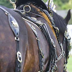 John Goodwin's Shires<br /> Winner  Pairs Turnouts