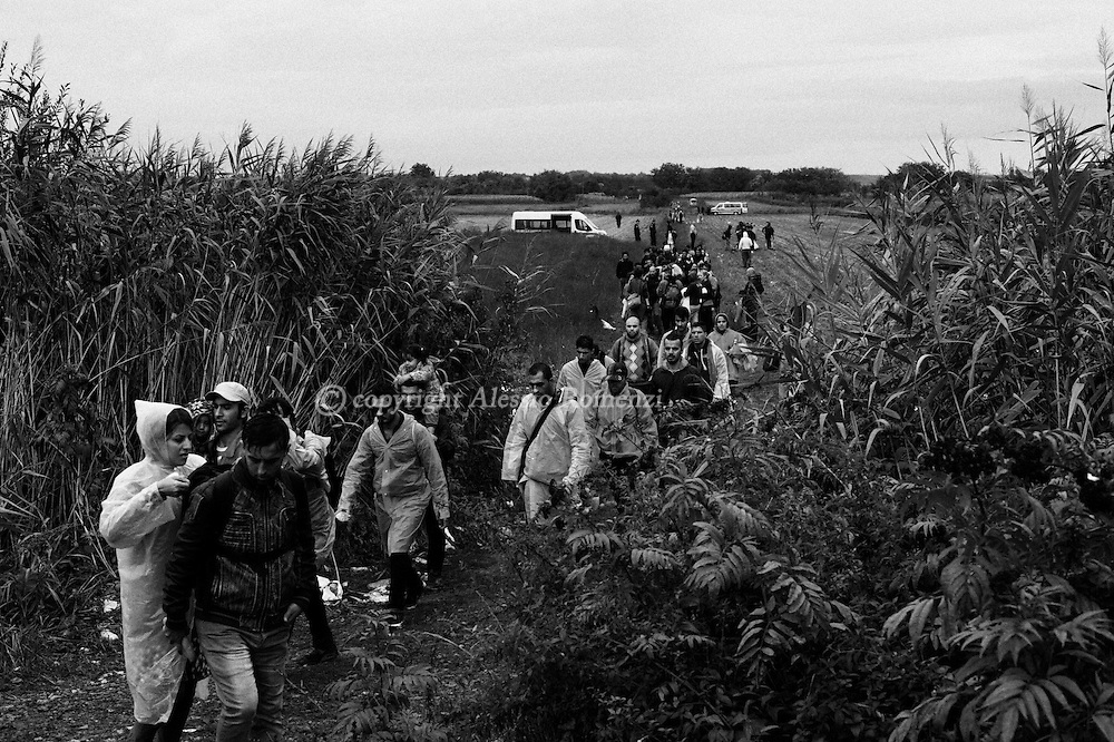 Croatia: Migrants walk towards the eastern-Croatia town of Tovarnik, close to the border between Croatia and Serbia. Alessio Romenzi