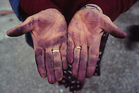 hands of a winemaker, Languirano, Italy