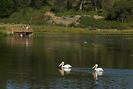 Balm Lake in Northern California is a place where nature meets man.  Handicap fishing is possible from the dock and birds are plentiful.