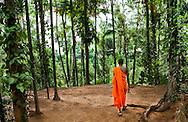 Monk walking in forest, Kandy, Sri Lanka