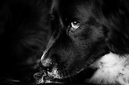 Black and white close up of a dogs profile