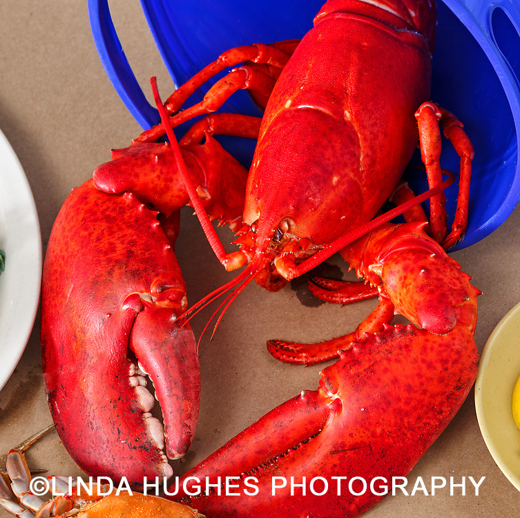 Red Maine Lobster