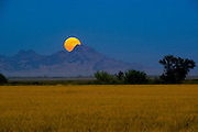 A harvest moon rises behind the Sutter Buttes over a rice field in Williams CA, Thursday Sept 19, 2013.<br />