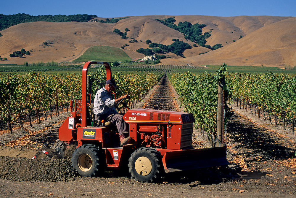 Tractor in vineyards, Gloria Ferrer, Sonoma Valley, Sonoma County, California