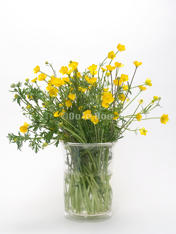 a bouquet of buttercup flowers