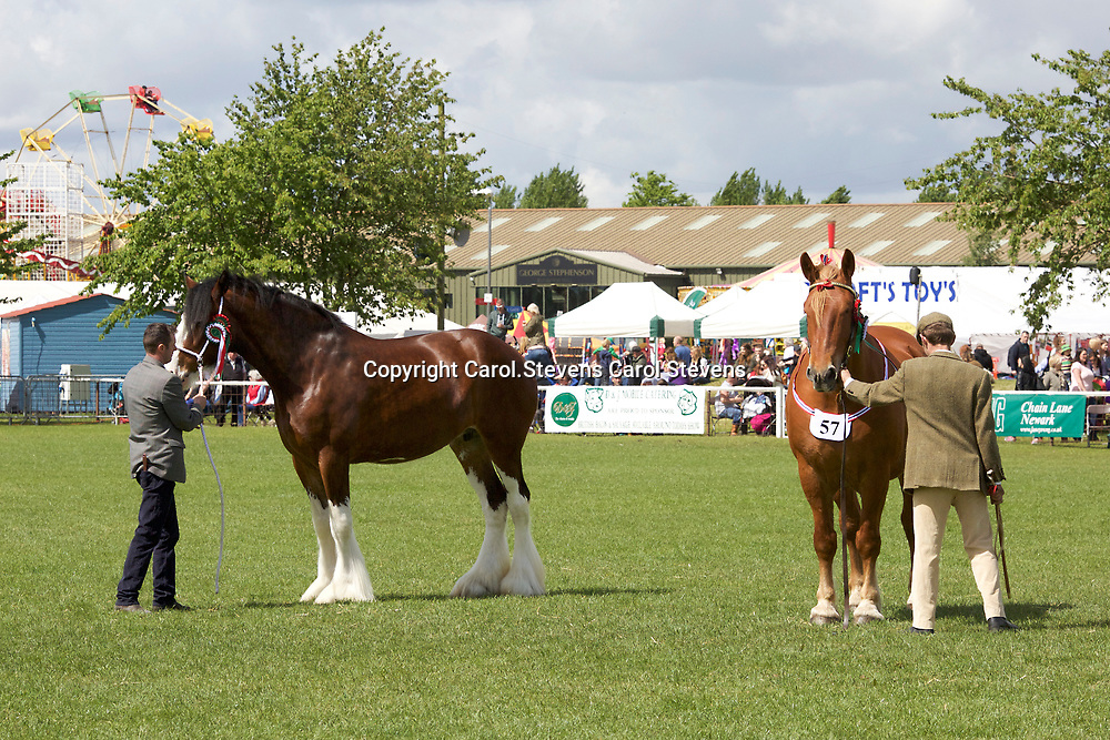LEFT<br /> J W &amp; M McIntyre's WEBERS SADIE JAKEY VICTORIA<br /> WINNER  Filly or Mare 3 years old and upwards<br /> CHAMPION CLYDESDALE<br /> SUPREME OVERALL HEAVY HORSE CHAMPION<br /> <br /> RIGHT<br /> George Pratt's KILMANNAN SHORT<br /> Gelding  f 2009<br /> Sire  Colony Paddy<br /> Dam  East on Spring<br /> WINNER  Barren Mare or Gelding  4 years old and upwards<br /> SUFFOLK CHAMPION
