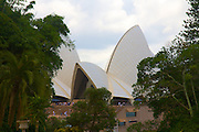 Opera House view from Botanic Gardens, Sydney..Paul Lovelace Photography.16.01.11