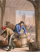 Curing herring by salting and packing into barrels.  From 'Graphic Illustrations of Animals and Their Utility to Man',  London, c1850.