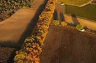 France, Languedoc Roussillon, Gard (30), Uzège, région Uzès, route bordée de platanes, vue aérienne