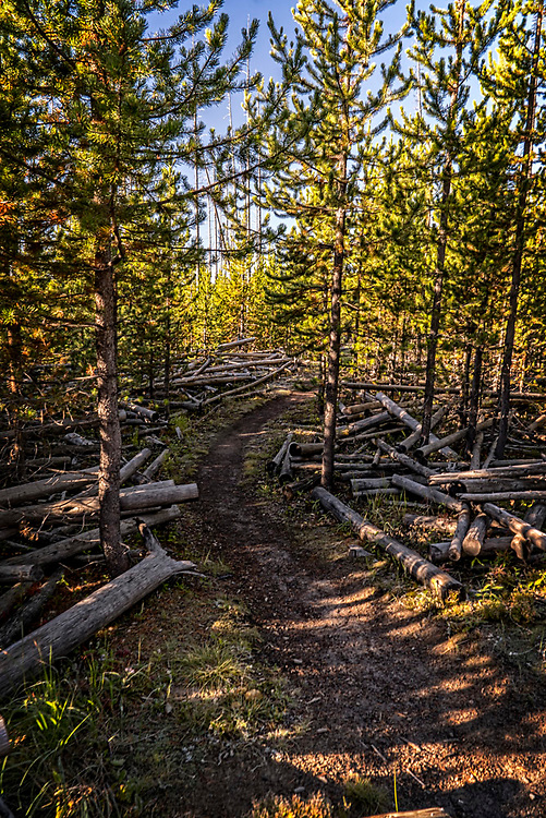 On this trail in Yellowstone, the old and the new woods met.  It is hard to say which is more beautiful.  We need both as they truly complement each other so well.