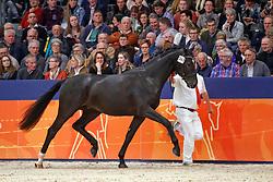 347, Kensington<br /> KWPN Stallionshow - 's Hertogenbosch 2018<br /> © Hippo Foto - Dirk Caremans<br /> 02/02/2018