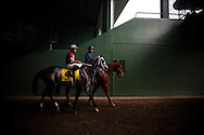 Tritap with COREY NAKATANI up before the 2013 running of the Strub Stakes at Santa Anita Park in Arcadia, California on February 02, 2013.
