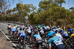 Rolling through the Adelaide Hills on Stage 2 of 2020 Santos Women's Tour Down Under, a 114.9 km road race from Murray Bridge to Birdwood, Australia on January 17, 2020. Photo by Sean Robinson/velofocus.com