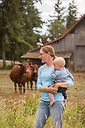 Shorthor Cow