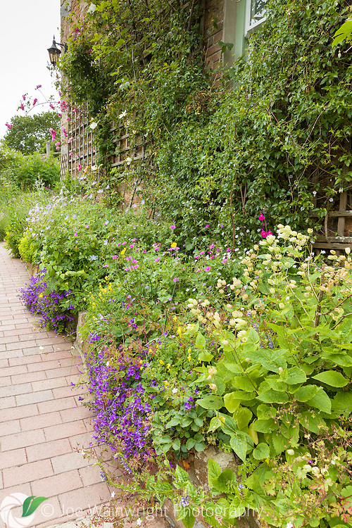 An herbaceous border hugs a wall at Judith Queree's Gardem, St. Ouen, Jersey. Planting includes Geraniums, Campanulas and roses. Photographed in June