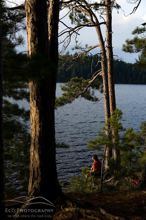A man sits beneath pine trees on an island in Prong Pond near Moosehead Lake Maine USA (MR)