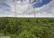 Mischwald, Baumwipfelpfad Steigerwald, Bayern, BRD