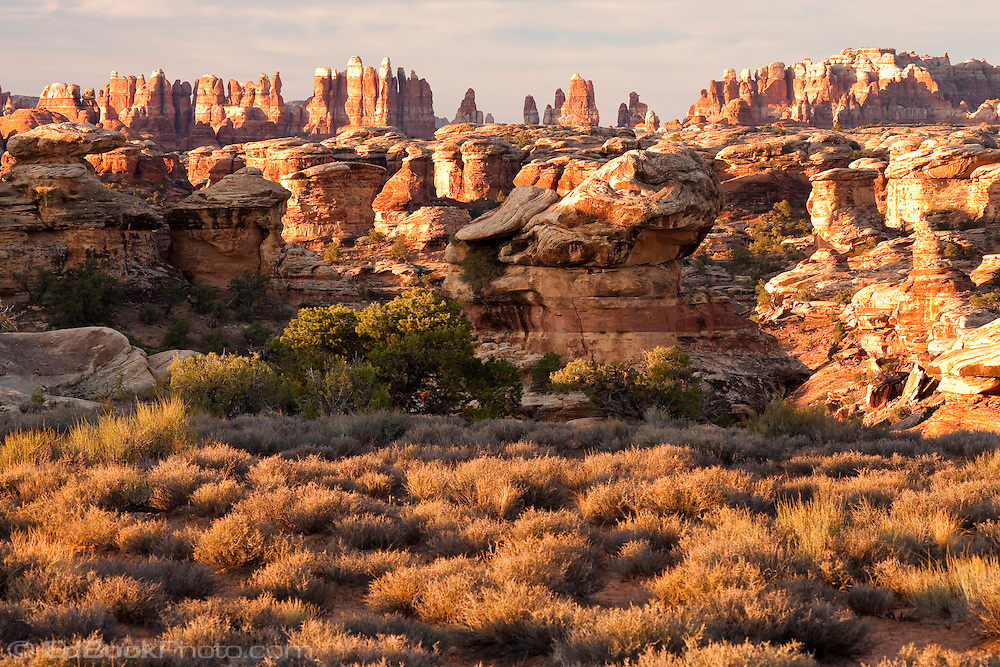 Morning light warms The Needles district of Canyonlands National Park, Utah, USA.