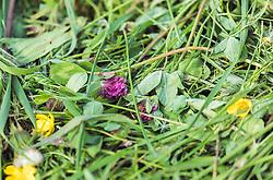 THEMENBILD - frisch gemähtes Gras und Wiesenblumen im Detail, aufgenommen am 23. Mai 2019, Kaprun, Österreich // freshly mown grass and meadow flowers in detail on 2019/05/23, Kaprun, Austria. EXPA Pictures © 2019, PhotoCredit: EXPA/ Stefanie Oberhauser