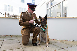 © Licensed to London News Pictures. 17/11/2017. London, UK. Mali, a Belgian Malinois receives the Animal Victoria Cross for bravery during an operation in Afghanistan in 2012, pictured with his handler, Corporal Daniel Hatley at Queen Mary College, London University. Photo credit: Vickie Flores/LNP