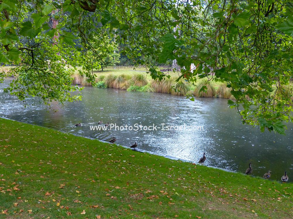 Botanic Garden, Christchurch, South Island, New Zealand