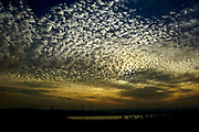 Puffy cotton like Cumulus clouds at sunset