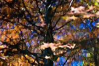 The beauty of autumn as shown in an abstract reflection.