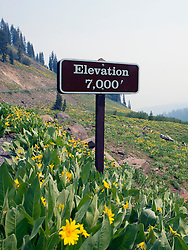 A mountain elevation sign at 7,000 feet is placed amongst wildflowers growing along the main road in Lassen Volcanic National Park, California, USA.