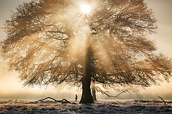© Licensed to London News Pictures. 06/02/2020. London, UK. A visitor walks through a misty Bushy Park in south west London at first light. After a period of clear and cold days, rain and wind are forecast for the next few days as the UK feels the effects of Storm Ciara. Photo credit: Peter Macdiarmid/LNP