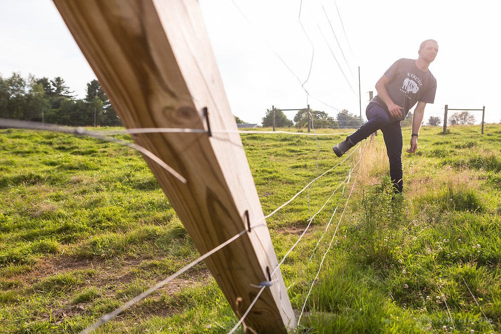 A farmer climbs through an electric fence separating two pastures on his bison farm during late afternoon.