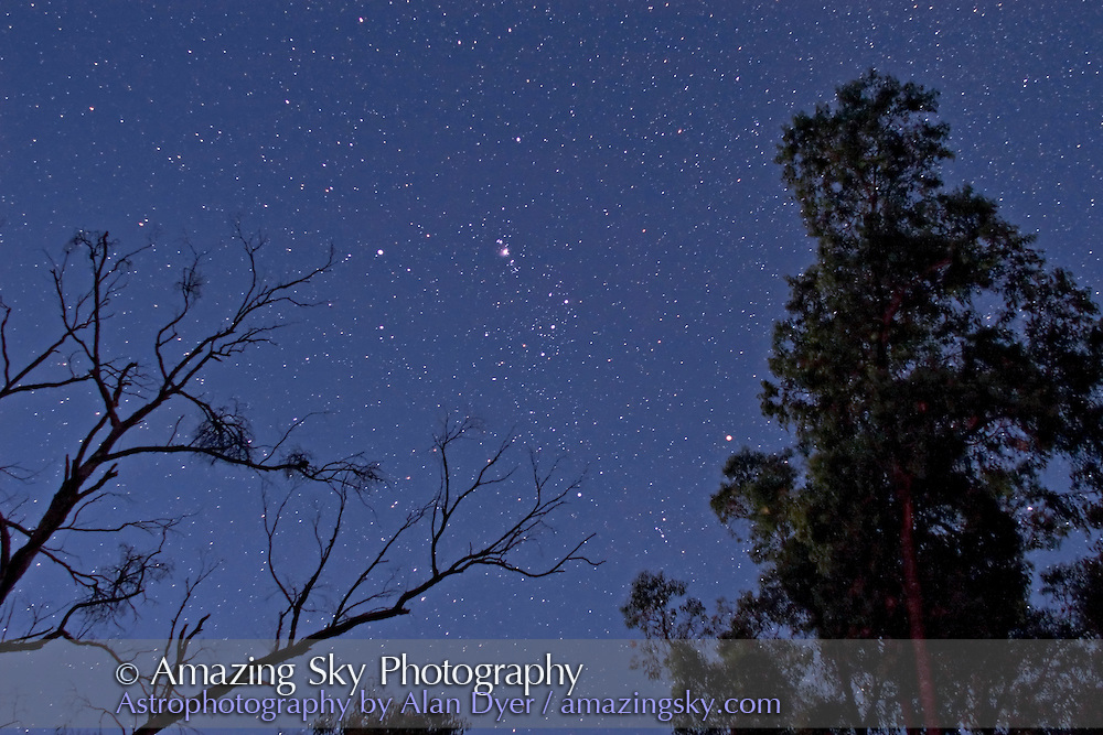 Orion setting thru trees in moonlight, from southern hemisphere, March 2008, from Coonabarabran, NSW. Taken with Canon 20Da and Canon 24mm L lens at f/2 and 13s exposure at ISO800.