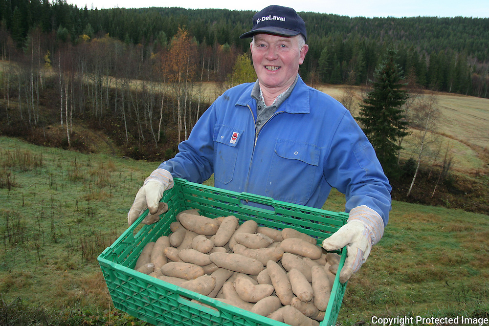mandelpotet fra Selbu. Ingebrigt Kulset startet med ti poteter fra konas hjemsted i Beiarn for noen ?r siden, og produserer p? 4-5 tonn ?rlig, av totalt 30-35 tonn potet. Alt selges lokalt.
