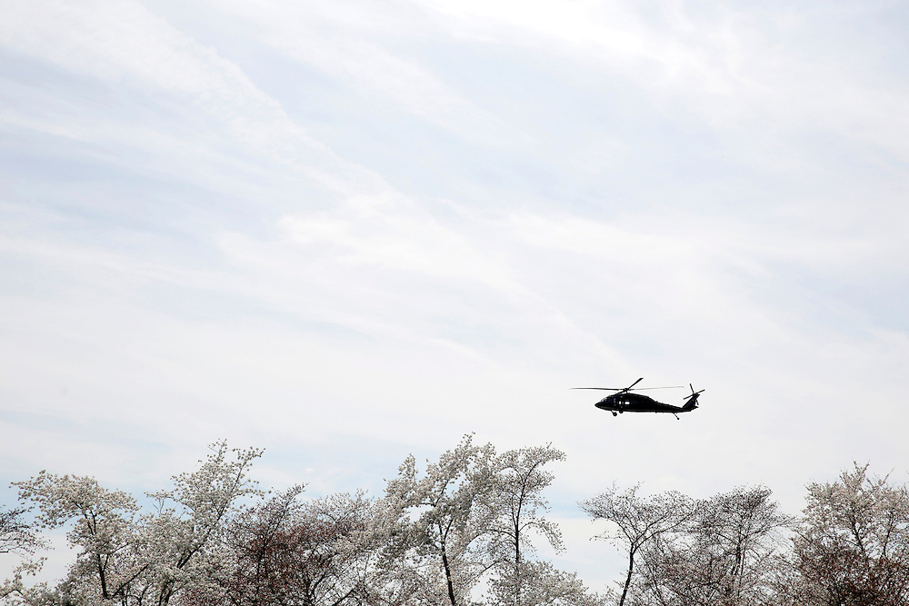 A helicopter flies over blooming cherry trees along the tidal bason in Washington March 23, 2016.      REUTERS/Joshua Roberts