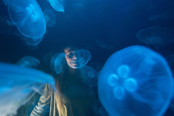 "© Licensed to London News Pictures. 20/11/2019. LONDON, UK. A staff member views ""win > < win"", 2017, by the artist collective Rimini Protokoll, a tank of live jellyfish, one of the few species that actually benefit from the effects of global warming. Preview of ""Eco-Visionaries"" exhibition at the Royal Academy of Arts in Piccadilly.  The exhibition examines humankind's ecological impact on the planet through works from 21 international practitioners using a variety of media.  The show runs 22 November to 23 February 2020.  Photo credit: Stephen Chung/LNP"
