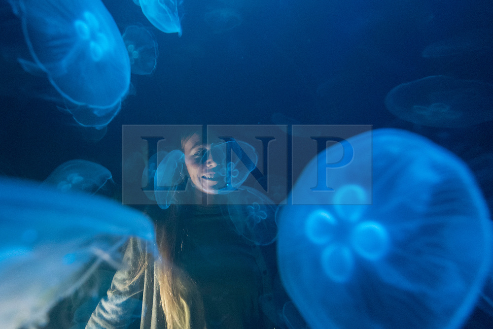 """© Licensed to London News Pictures. 20/11/2019. LONDON, UK. A staff member views """"win > < win"""", 2017, by the artist collective Rimini Protokoll, a tank of live jellyfish, one of the few species that actually benefit from the effects of global warming. Preview of """"Eco-Visionaries"""" exhibition at the Royal Academy of Arts in Piccadilly.  The exhibition examines humankind's ecological impact on the planet through works from 21 international practitioners using a variety of media.  The show runs 22 November to 23 February 2020.  Photo credit: Stephen Chung/LNP"""