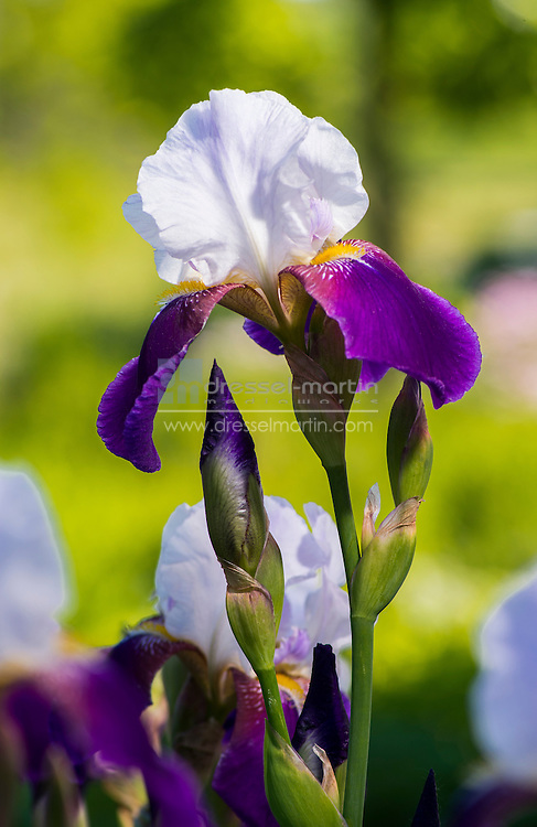 chatfield blooms