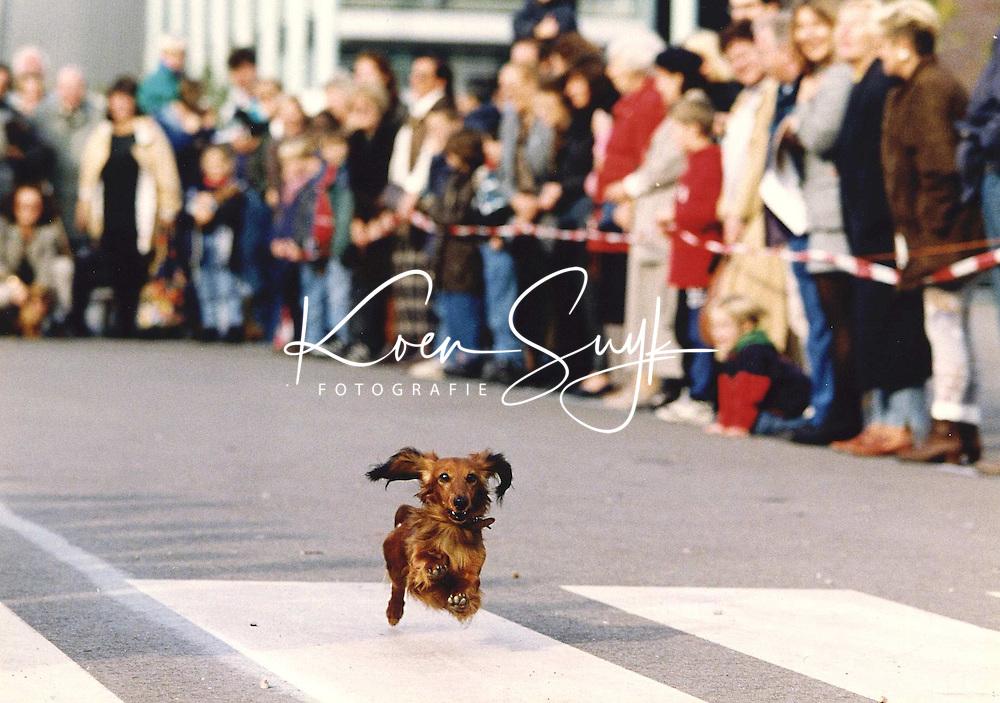 Een teckel in vliegende actie zaterdag tijdens de teckelrace bij het Rotterdamse Museum Boymans-Van Beuningen. Met de race een tentoonstelling geopend van de Britse kunstenaar David Hockney. Op de expositie zijn zo'n 50 doeken te zien waarop de lievelingsteckels, Stanley en Boogie, van de kunstenaar geportretteerd zijn.29-10-1995