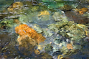 abstract shapes and reflections on Ohanepecoosh Creek, Mt. Rainier National Park