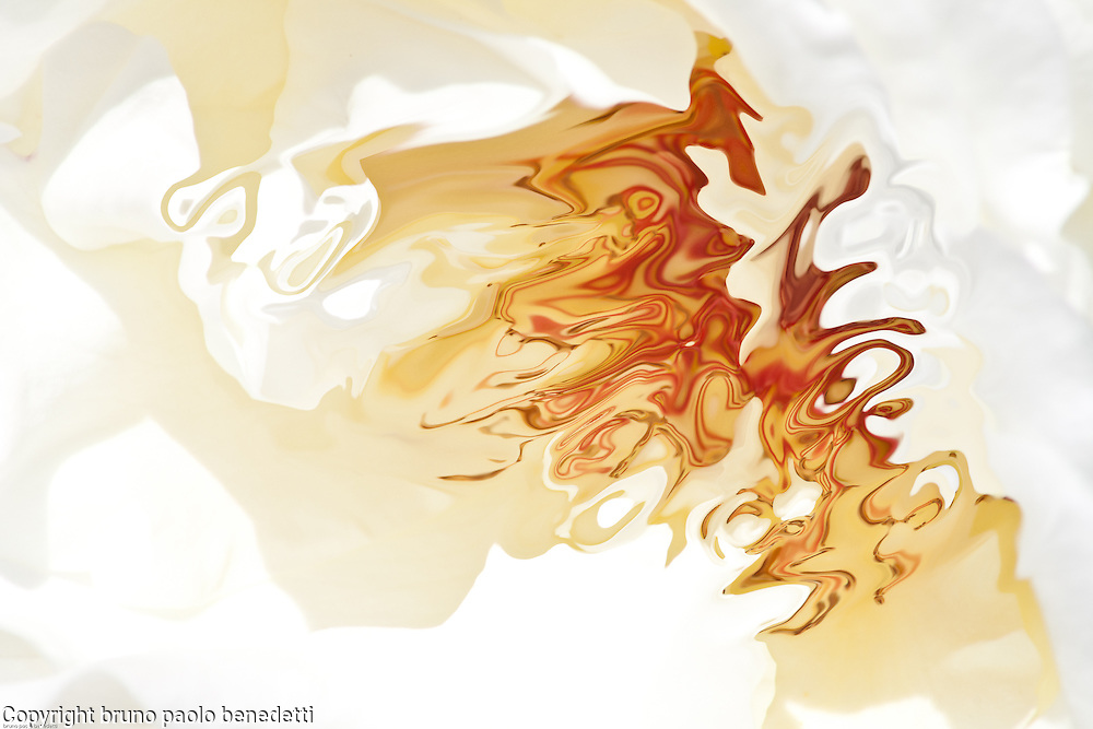 abstract fluid orange shapes seem dancing on gleaming white background.Dark and light orange color change into aquerello texture.