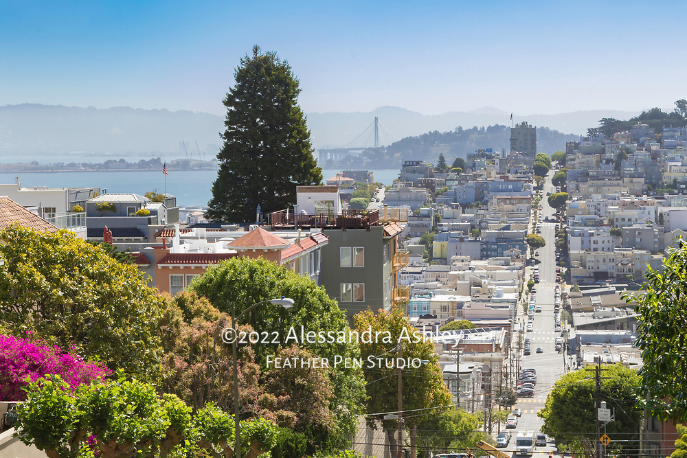 San Francisco street scene depicting the city's characteristic hillly terrain and lush greenery, with the Bay Bridge in the distance.