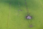 Nederland, Drenthe, Gemeente Midden-Drenthe, 05-08-2014; Mantingerveld, grote grazers (Heckrunden) drinken bij een plas<br /> Large herbivores (Heckrunden) drinking from a puddle, east Netherlands.<br /> luchtfoto (toeslag op standard tarieven); aerial photo (additional fee required); copyright foto/photo Siebe Swart