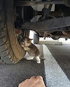 """A Guy Found A Scared Kitten Under A Truck And Just Couldn't Say No To Her<br /> <br /> When this good guy saw a scared kitten clinging to a truck near his office, he just couldn't leave her like that. Turns out, """"the mama kitty ran off… and ditched the kitten. No other kittens could be found,"""" <br /> <br /> Immediately after finding the kitty, the man sent the picture to his wife asking """"can I bring it home?"""" His wife's reaction? """"Who could say no to that face?"""" – she said.<br /> The first thing they did was take her to the vet. """"That's how we found she's a she. Got shots, the whole new kitten package.  She was only 4-5 weeks old when found.""""<br /> """"[Axel] has made herself right at home with our 19 year old cat and 2 year old dog. She's safe, sound, warm, and… loved,"""" – the couple explained.<br /> ©Exclusivepix Media"""