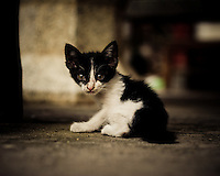 A black and white kitten looks apprehensive in a back alley, Luang Prabang, Laos, Southeast Asia.
